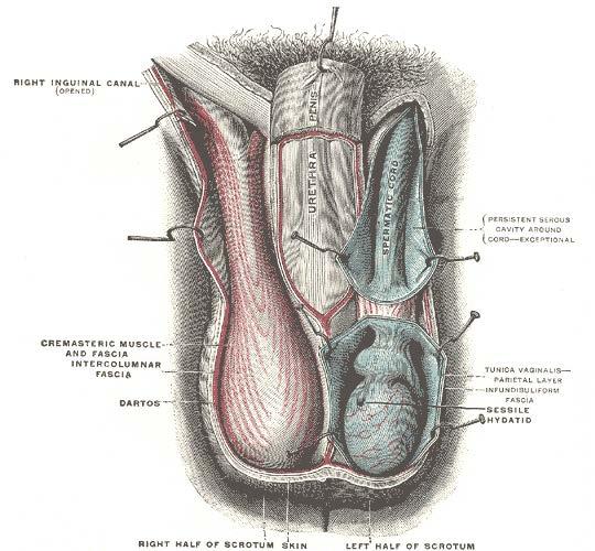 prostatemassageimage